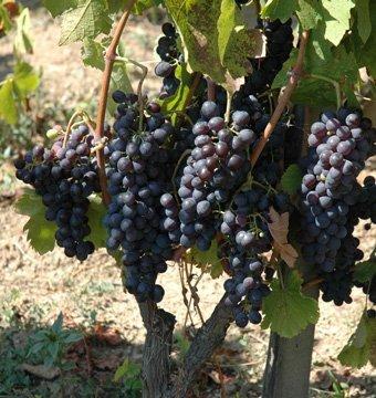 Domaine des Escaravailles Vin Doux Naturel rouge 2014-2126