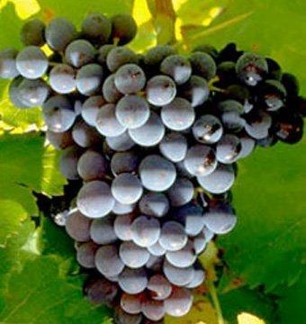 Domaine des Escaravailles Vin Doux Naturel rouge 2014-1673