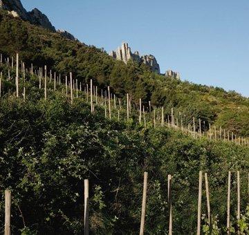 Les Amis de la Bouïssière Vin de France 2012-3202